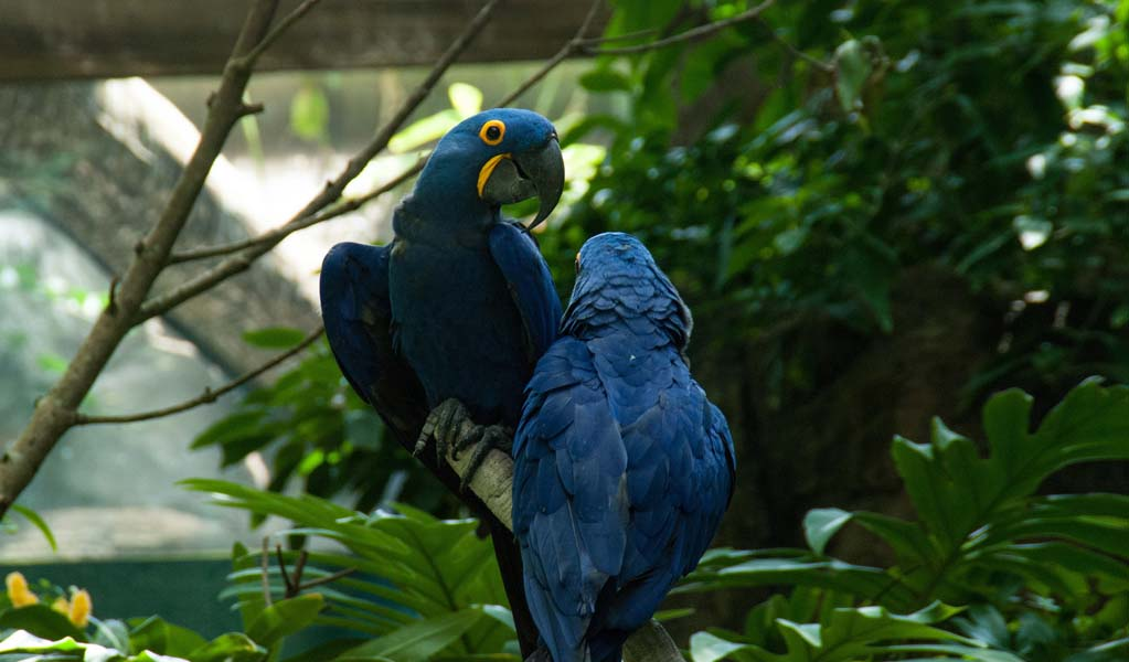 Magical Blue Macaw