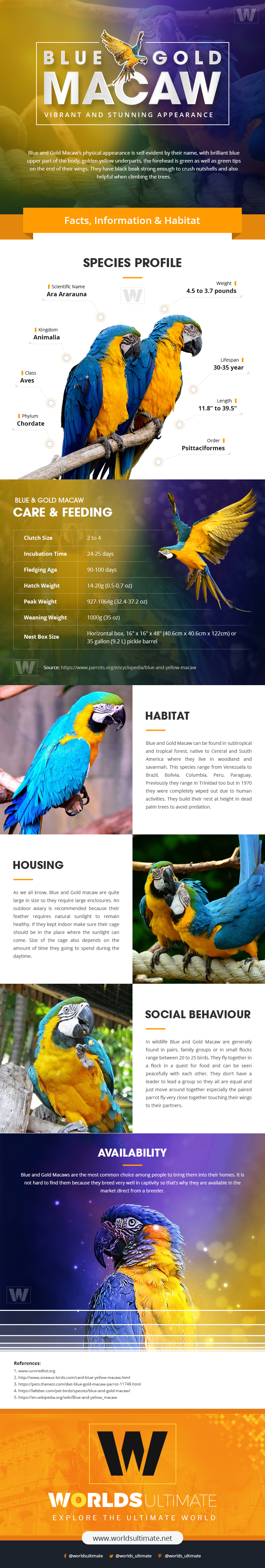 Blue and Gold Macaw: Vibrant and Stunning Appearance [Infographic]