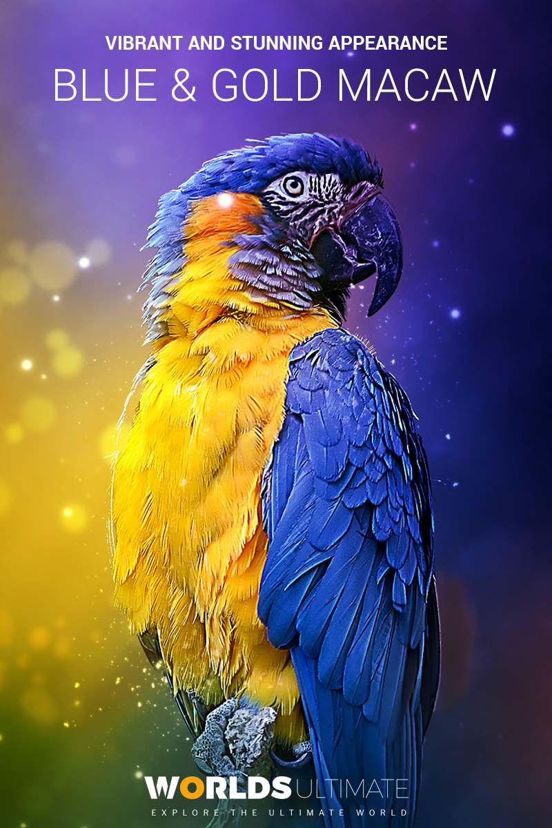 Blue and Gold Macaw Facts